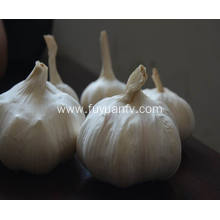 garlic factory from jining