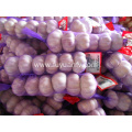2018 new crop hot sale normal white garlic