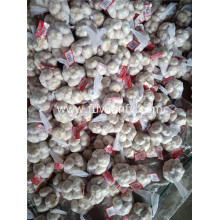 top quality normal white garlic to Euroepan