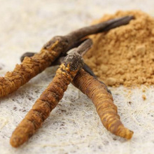 Health care product cordyceps sinensis extract powder