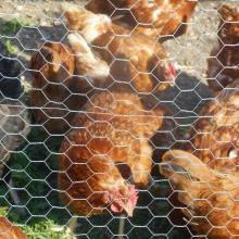 Chicken Cage Hexagonal Wire Netting