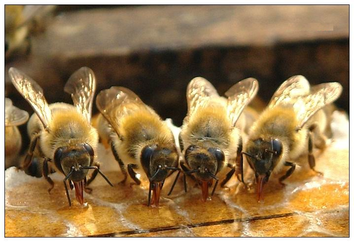 wholesale natural and pure bee honey low price