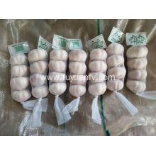 China for Bulk Natural Solo Garlic Pure white garlic 5.0-5.5cm supply to Guadeloupe Exporter