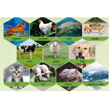 China Manufacturers for Betaine Anhydrous Livestock Nutrition Feed Additives  Betaine Anhydrous supply to Morocco Suppliers