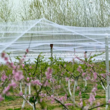 China for Plastic Slope Protection Net Gardens Bird Netting Keeps Pest Birds Out supply to Spain Suppliers