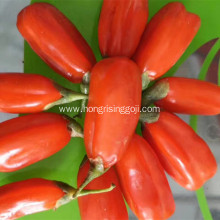 Goji berry contained the a lot of nutrition