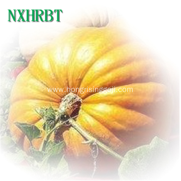 Hot sale cheaper Shine skin Pumpkin seed