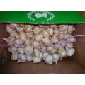 Fresh Normal Garlic Jinxiang
