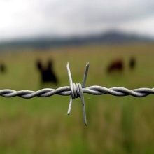 Weight Barbed Wire Roll Fence