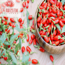 Free Sample Lower cholesterol Healthy Goji berries
