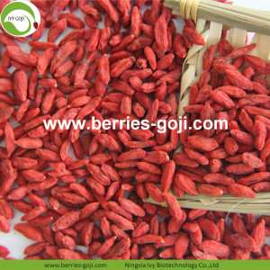 Factory Supply Nutrition Dried Lycium Barbarum