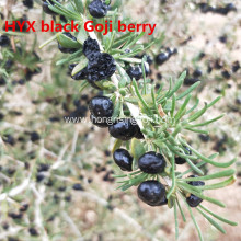 Black Gojiberry Support eye health/improve your vision