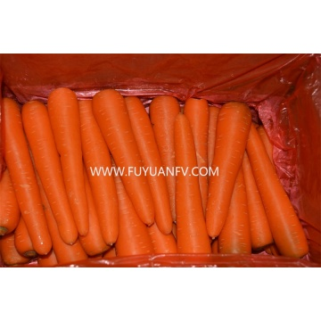 Fresh carrot are in season