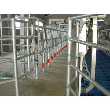 dairy cow auto milking parlors