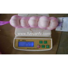 High Efficiency Factory for 5.5Cm White Garlic best quality round garlic export to Kyrgyzstan Exporter