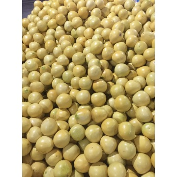 Export Standard Quality of Fresh Pomelo