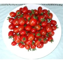 Fresh Whole Peeled Tomato in Tin