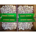 Fresh Normal White Garlic Best Price
