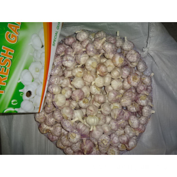 2019 Normal Fresh Garlic