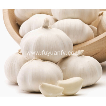 white skin garlic jinxiang crop fresh garlic