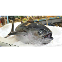 High Definition for Frozen Seafood Mix In Fish Whole Round Sea Frozen Big Eye Tuna supply to Liberia Importers