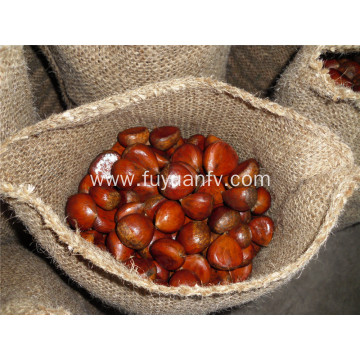 fresh chestnut 30-40 pcs/kg
