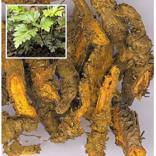 Shizhu natural coptis high quality
