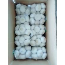 ODM for White Fresh Garlic Fresh Normal white garlic export to Latvia Exporter