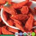 Free Pesticide organic goji berries