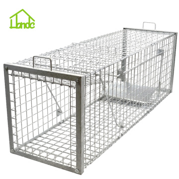 Strong Humane Cage Traps for Bobcat Fox