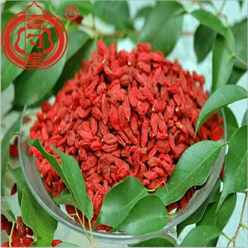 The nutrient-rich Goji Berries Fruits Wholesales