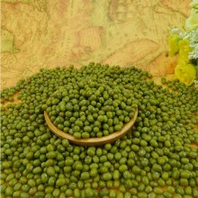 High Quality for Green Mung Bean,Natural Grown Mung Bean,Grade A Green Mung Bean Manufacturer in China Organic Food grade Green mung beans supply to Montenegro Supplier
