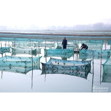Aquaculture attractant TMAO for shrimp and fish