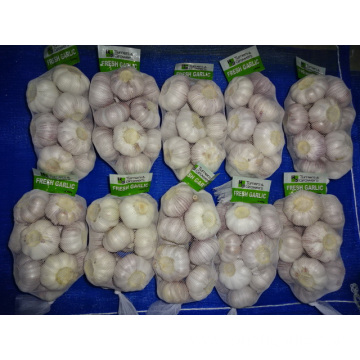 Normal White Garlic Crop 2019
