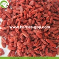 Factory Supply Healthy Super Food Dried Red Goji