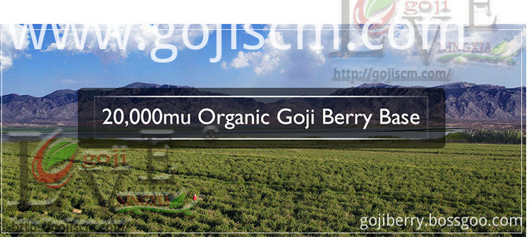 ORGANIC Plump GOJI BERRY base