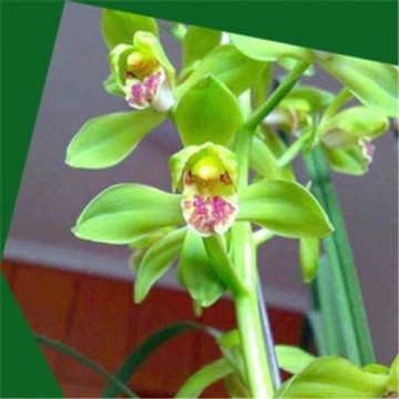 Decorative artificial orchid flower
