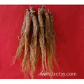 red korean ginseng extract
