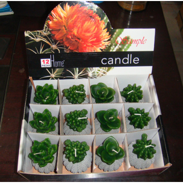 cactus plant flower craft candle