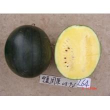F1 hybrid black hull watermelon seed