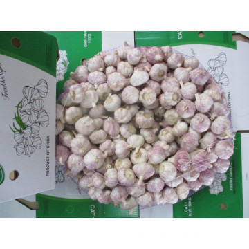 Normal Garlic From Jinxiang