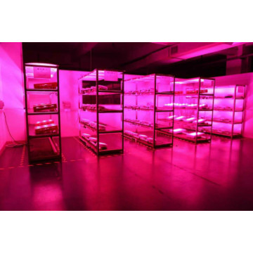 Fusi lemu COB 300W LED Plant Grow Light