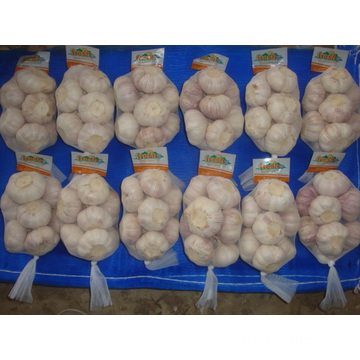 Regular White Garlic Of Size 5.5 Packing 500g