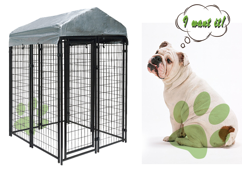 huge steel dog kennel