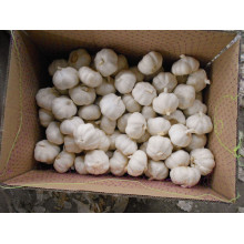 Bulk fresh white skin garlic