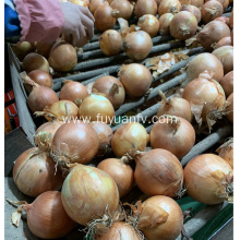 fresh yellow onion export to Indonesia