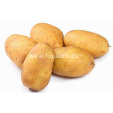 Hotsale fresh potato good quality