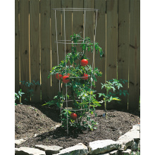 Customized for Metal Plant Supports Tomato Cage Plant Supports supply to Cape Verde Supplier