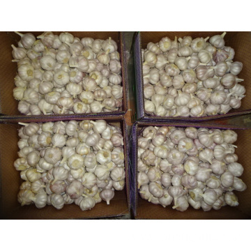 Normal White Garlic Fresh New Crop Jinxiang
