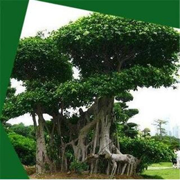 Customizable artificial banyan tree